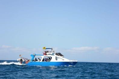 Fancy Tazacorte Safari dei delfini e delle balene a La Palma