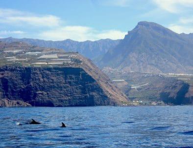 La Palma dal mare il safari dei delfini e delle balene