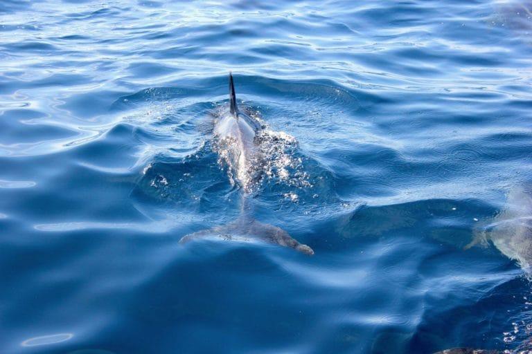 Safari dei delfini e delle balene a La Palma-11