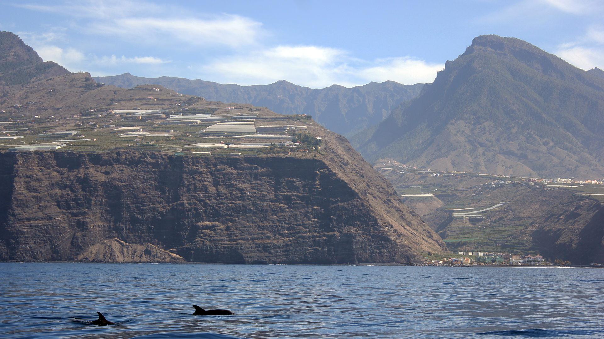 informazioni di viaggio la-palma-dal-mare-e-delfini