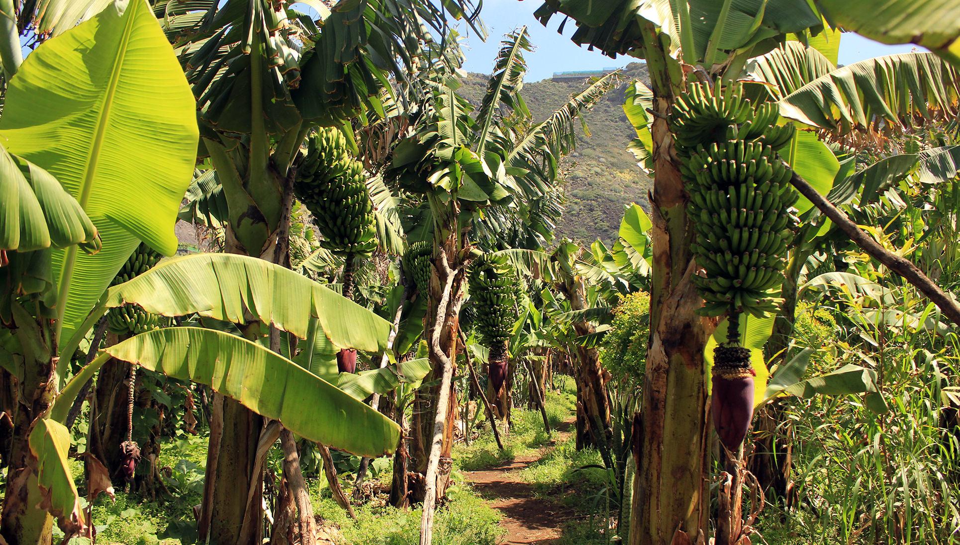 Perchè visitare l'isola de La Palma Canarie