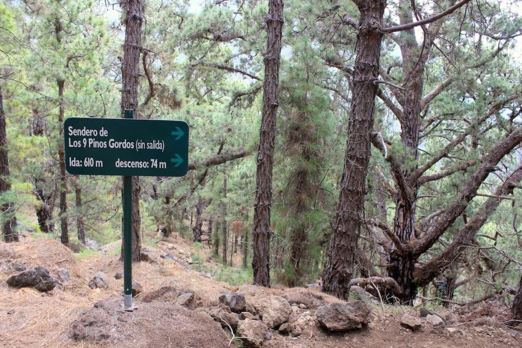 La Palma il Segnale per il Sentiero dei Pinos Gordos