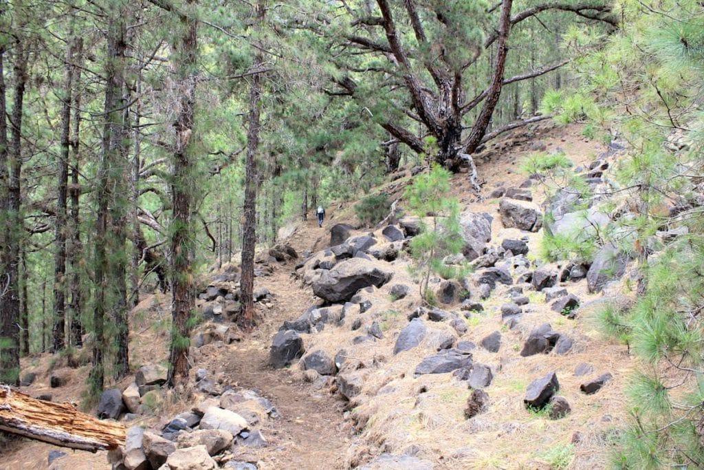 La Palma Trekking Sentiero dei Pinos Gordos Caldera de Taburiente