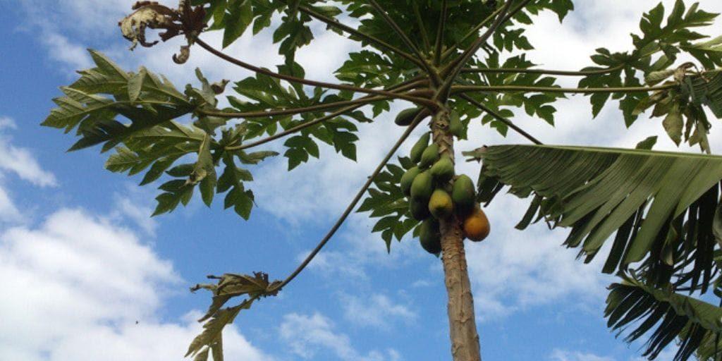 El Platanologico- ecological bananas plantation in La Palma 5