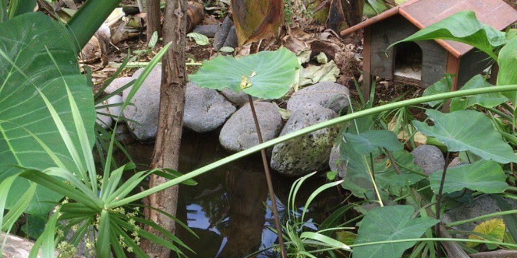 El Platanologico- ecological bananas plantation in La Palma 7