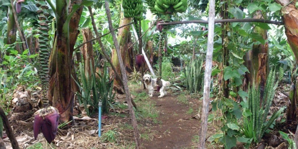 El Platanologico- ecological bananas plantation in La Palma 9