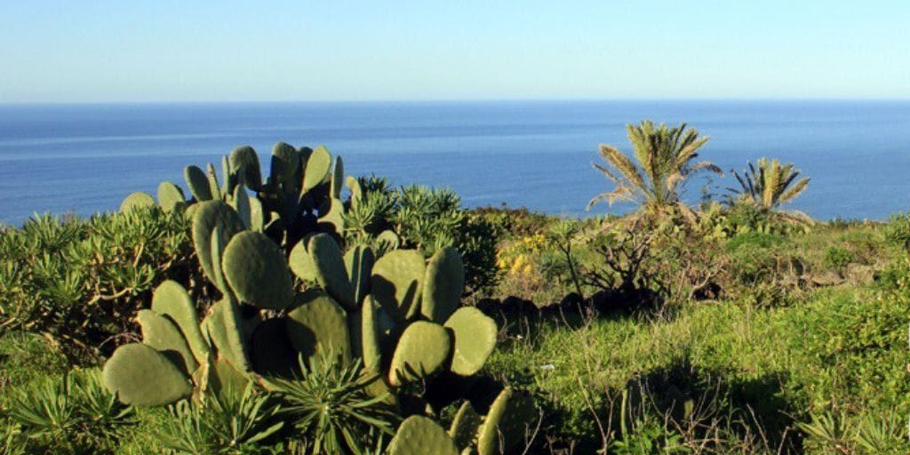 Gallegos La Palma 8