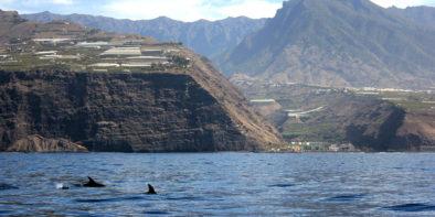 gita in barca per vedere i delfini