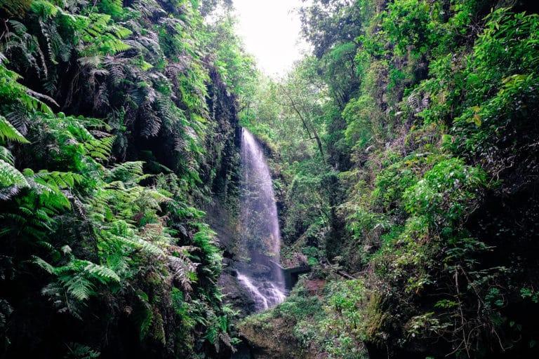 le più belle camminate de La Palma i boschi di laurisilva