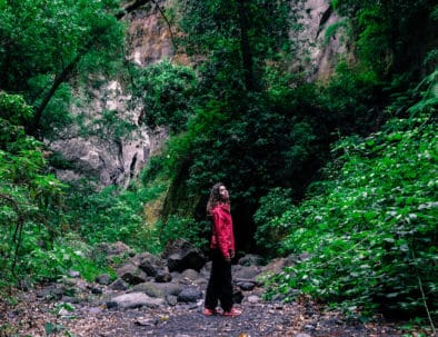 Escursioni Los Tilos Laurisilva La Palma Canarie