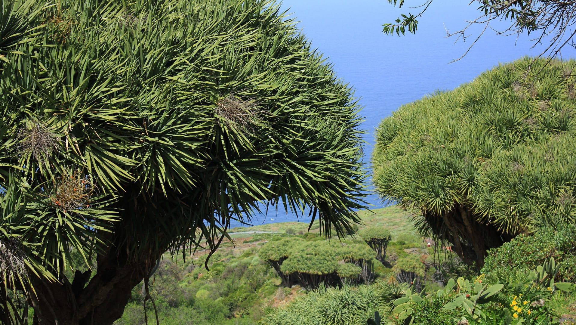 Trekking sentieri camminate escursioni La Palma Natural Isole Canarie