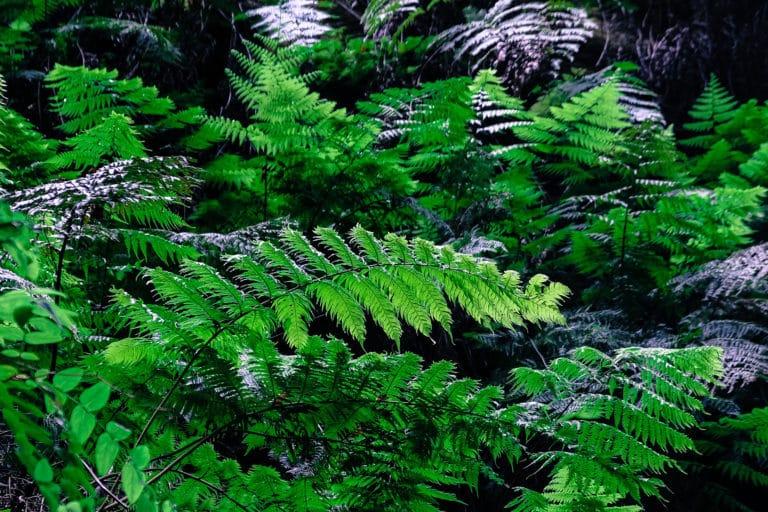 Bosque de Laurisilva Los Tilos La Palma