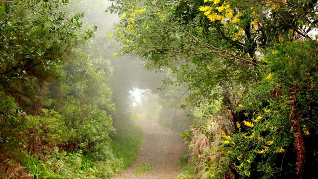 camino-monte-niebla