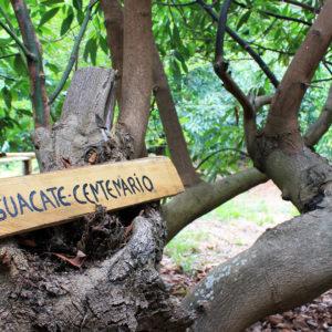 visita guidata coltivazione ecologica el viento a favor