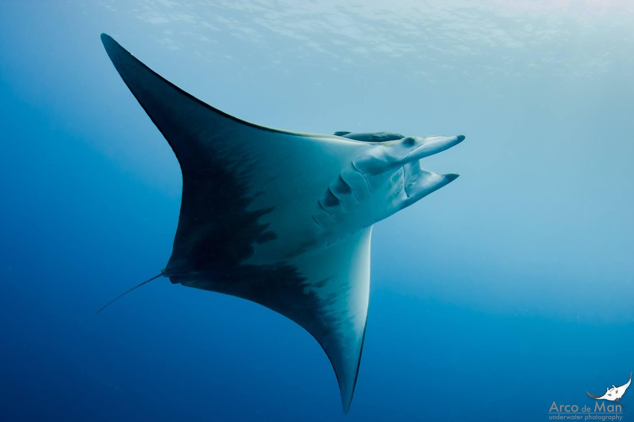Diving immersioni subacquee a La Palma