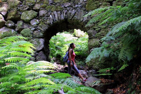 Bosque de Laurisilva Reserva de La Biosfera La Palma excursiones visitas guiadas Los Tilos La Galga Marcos y Cordero