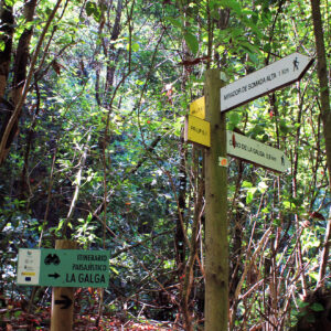 Laurel Forest Biosphere Reserve Excursions La Galga Los Tilos Marcos y Cordero excursion in the wood of the tertiary