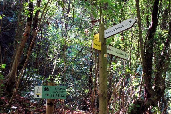 Laurel Forest Biosphere Reserve Excursions La Galga Los Tilos Marcos y Cordero excursion in the wood of the tertiary