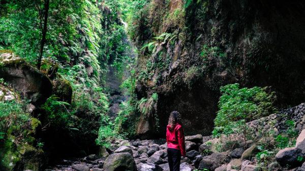 Bosque de Laurisilva Reserva de La Biosfera La Palma excursiones visitas guiadas