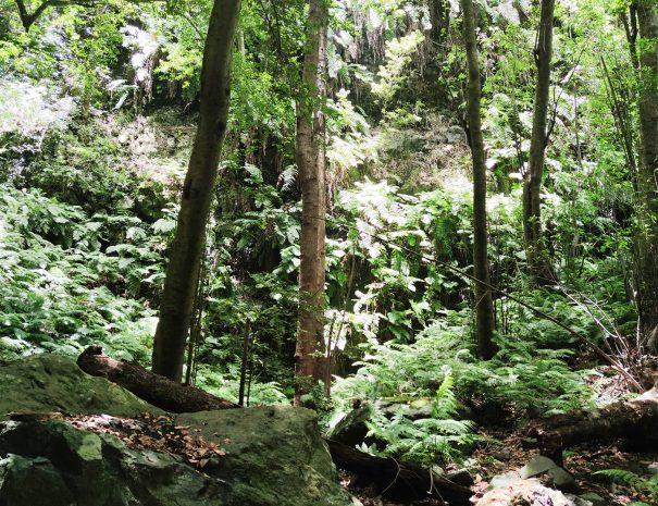 La-Galga-bosque